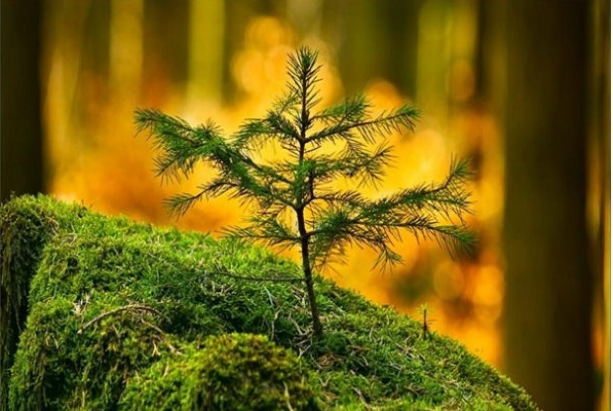 Лес боится огня
