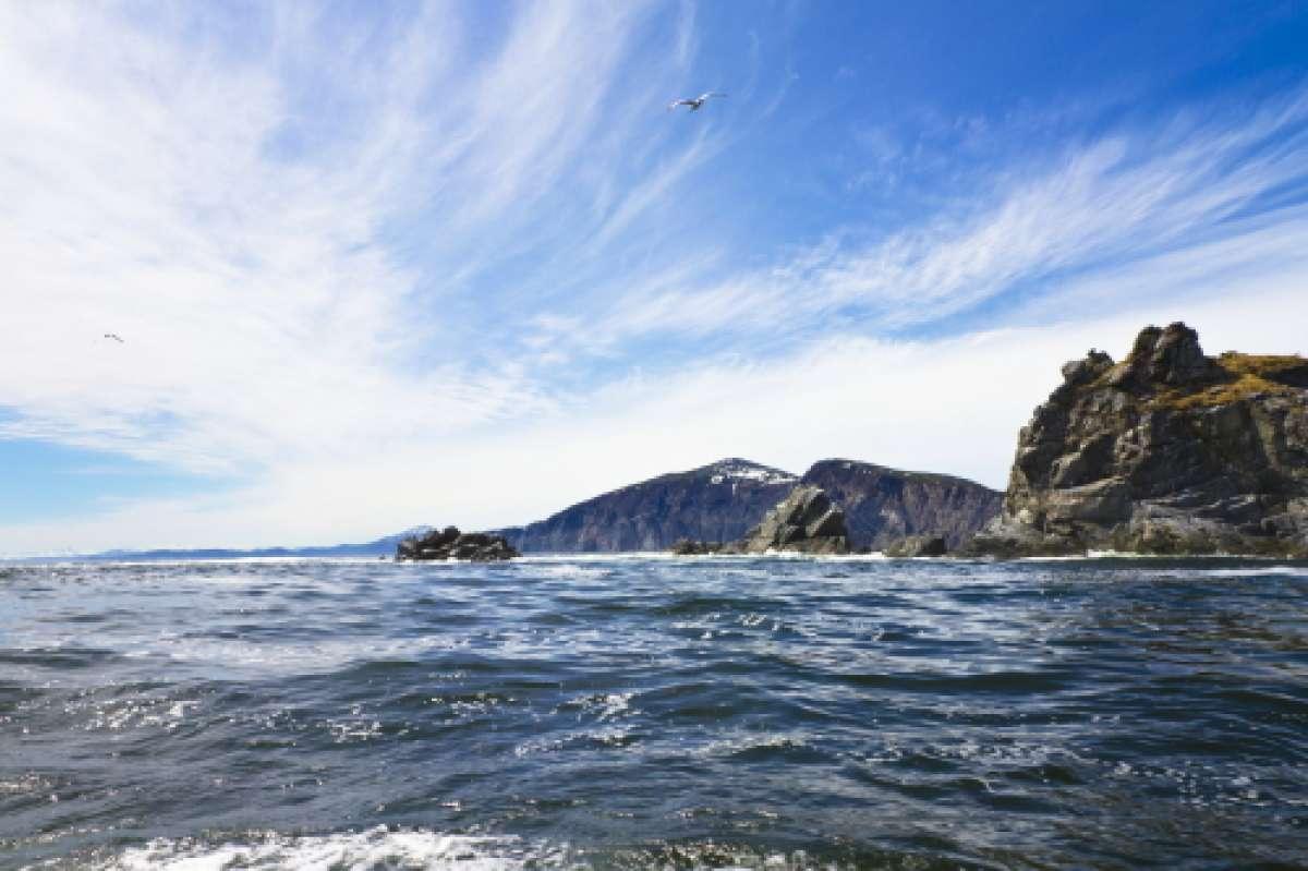 """XI научно-практическая конференция  """"Морские и прибрежные особо охраняемые природные территории"""